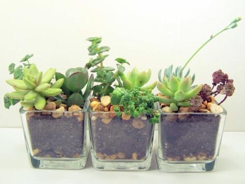Ofiste doğal bitki bakımı